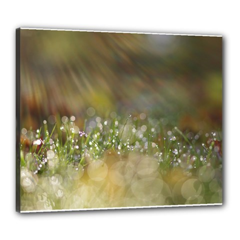 Sundrops Canvas 24  X 20  (framed)