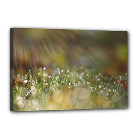 Sundrops Canvas 18  X 12  (framed)