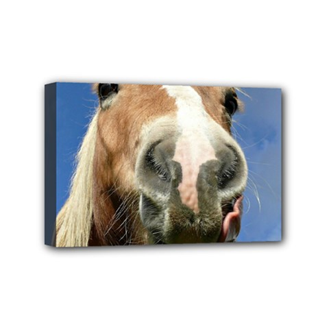 Haflinger  Mini Canvas 6  x 4  (Framed)