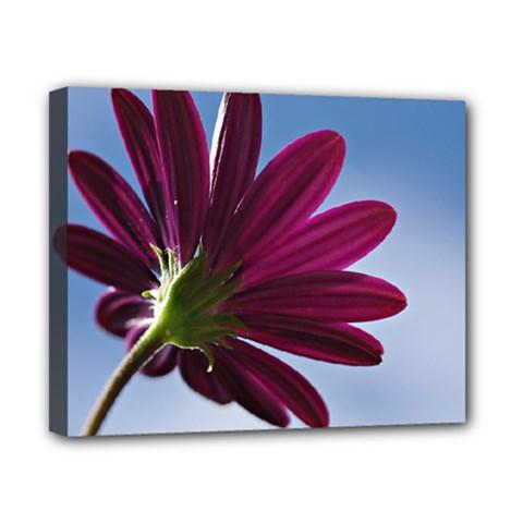 Daisy Canvas 10  X 8  (framed)
