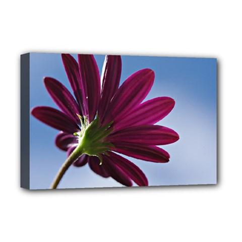 Daisy Deluxe Canvas 18  X 12  (framed)