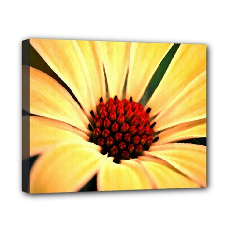 Osterspermum Canvas 10  x 8  (Framed)