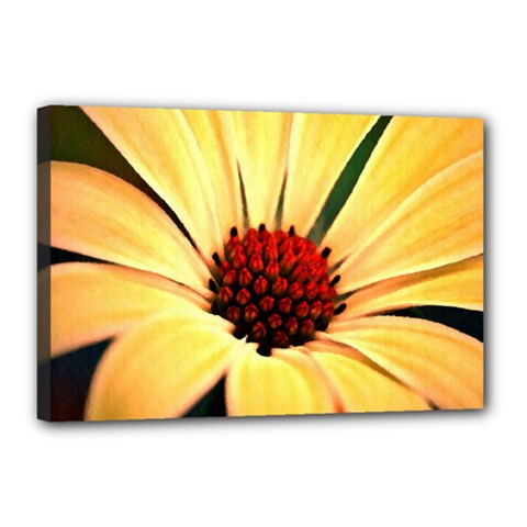 Osterspermum Canvas 18  x 12  (Framed)