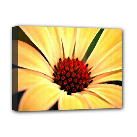 Osterspermum Deluxe Canvas 16  x 12  (Framed)