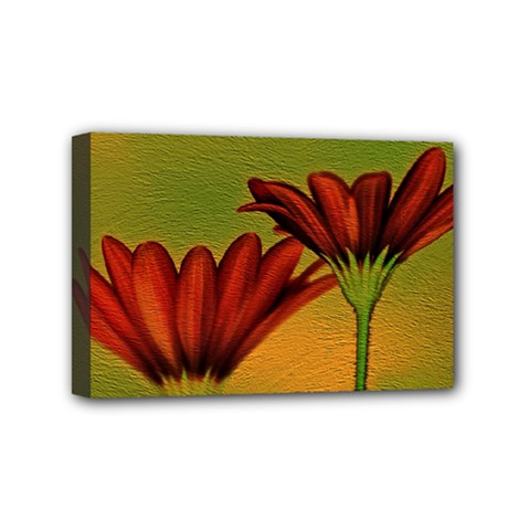 Osterspermum Mini Canvas 6  x 4  (Framed)