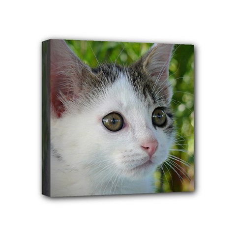 Young Cat Mini Canvas 4  x 4  (Framed)