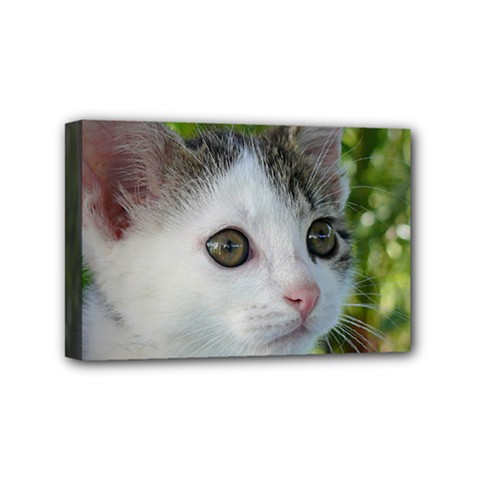 Young Cat Mini Canvas 6  x 4  (Framed)