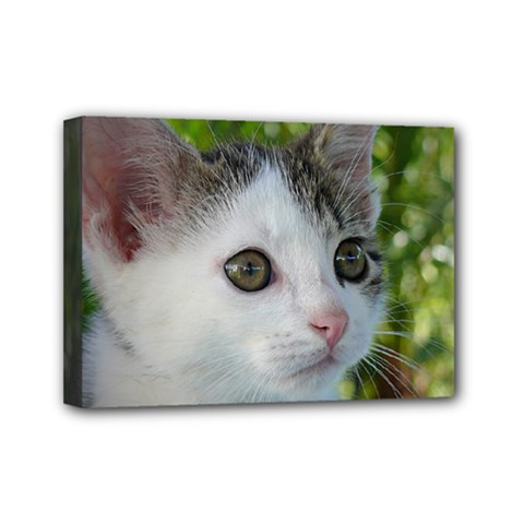 Young Cat Mini Canvas 7  x 5  (Framed)