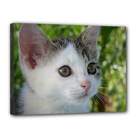 Young Cat Canvas 16  X 12  (framed)
