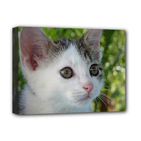 Young Cat Deluxe Canvas 16  x 12  (Framed)