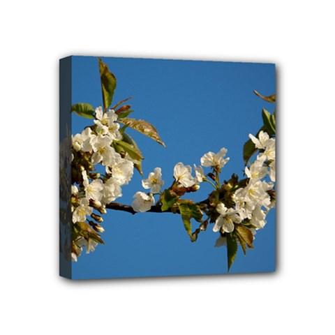 Cherry Blossom Mini Canvas 4  x 4  (Framed)