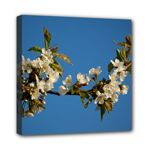 Cherry Blossom Mini Canvas 8  X 8  (framed)