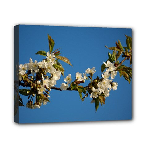 Cherry Blossom Canvas 10  X 8  (framed)