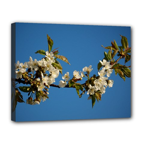 Cherry Blossom Canvas 14  x 11  (Framed)