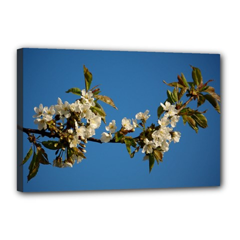 Cherry Blossom Canvas 18  x 12  (Framed)
