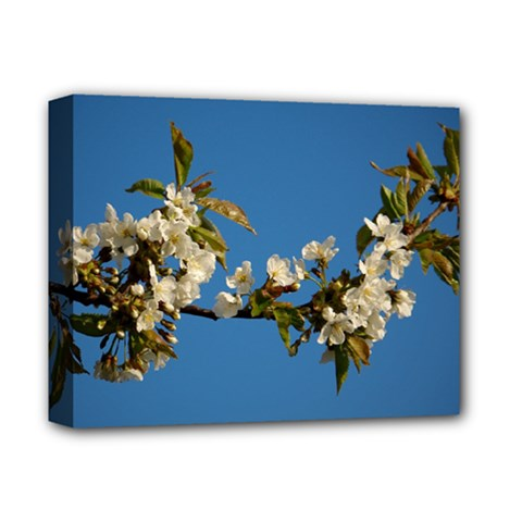 Cherry Blossom Deluxe Canvas 14  x 11  (Framed)