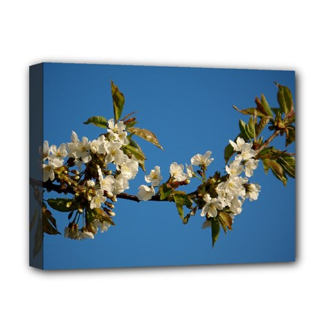 Cherry Blossom Deluxe Canvas 16  X 12  (framed)