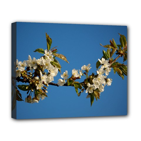 Cherry Blossom Deluxe Canvas 20  X 16  (framed)