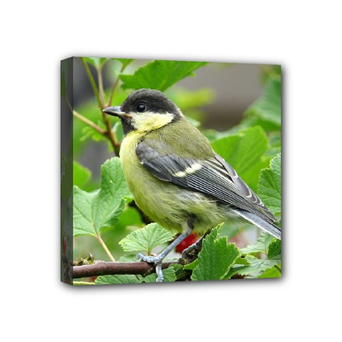 Songbird Mini Canvas 4  x 4  (Framed)