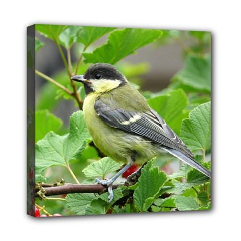 Songbird Mini Canvas 8  X 8  (framed)