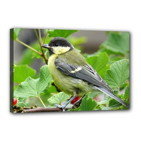Songbird Canvas 18  X 12  (framed)