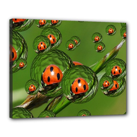 Ladybird Canvas 20  x 16  (Framed)