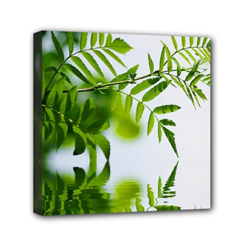 Leafs With Waterreflection Mini Canvas 6  x 6  (Framed)