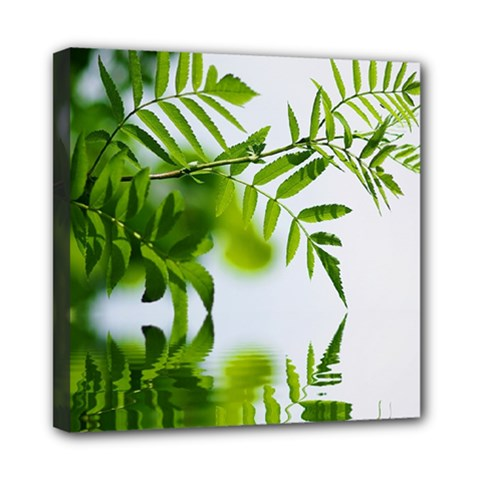 Leafs With Waterreflection Mini Canvas 8  x 8  (Framed)