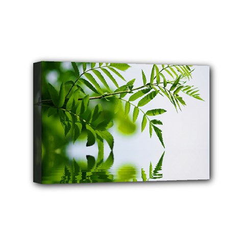 Leafs With Waterreflection Mini Canvas 6  x 4  (Framed)