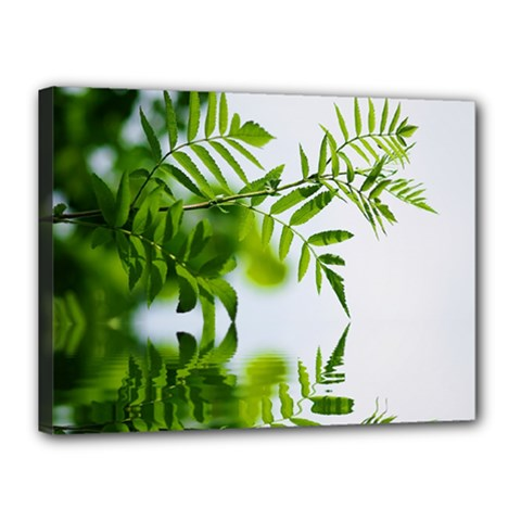 Leafs With Waterreflection Canvas 16  X 12  (framed)