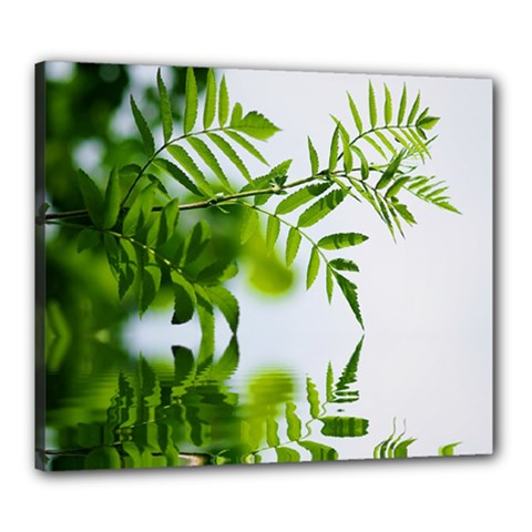 Leafs With Waterreflection Canvas 24  X 20  (framed)