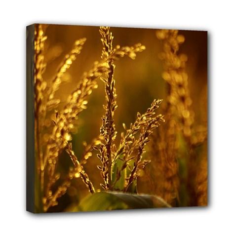 Field Mini Canvas 8  x 8  (Framed)