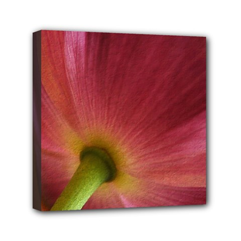 Poppy Mini Canvas 6  x 6  (Framed)