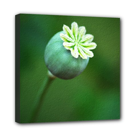 Poppy Capsules Mini Canvas 8  x 8  (Framed)