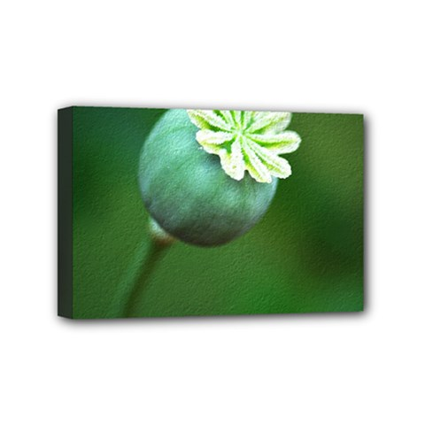 Poppy Capsules Mini Canvas 6  x 4  (Framed)