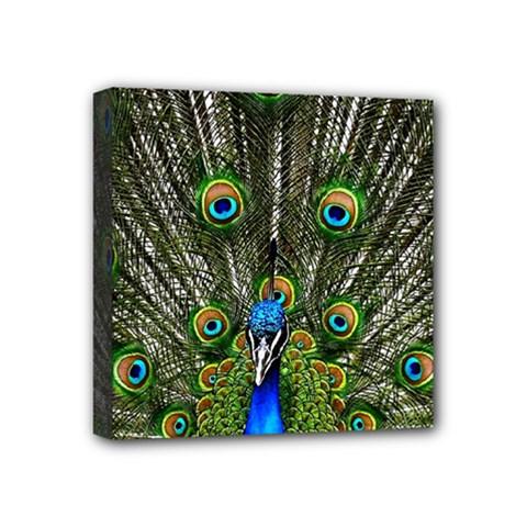 Peacock Mini Canvas 4  x 4  (Framed)