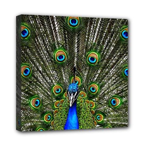 Peacock Mini Canvas 8  x 8  (Framed)
