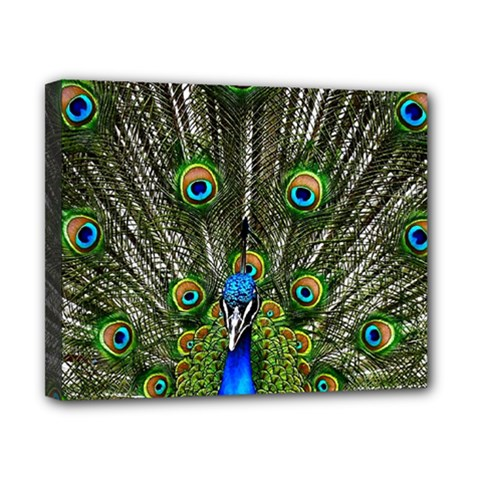 Peacock Canvas 10  X 8  (framed)
