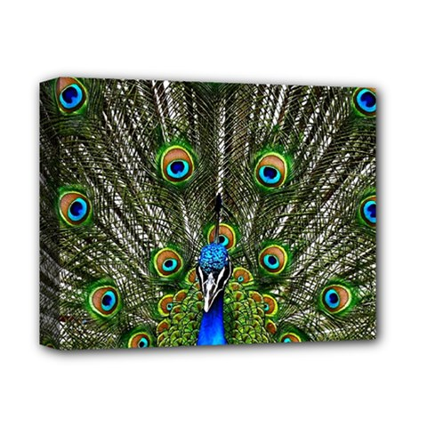 Peacock Deluxe Canvas 14  X 11  (framed)