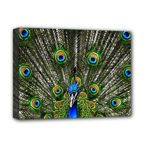 Peacock Deluxe Canvas 16  X 12  (framed)