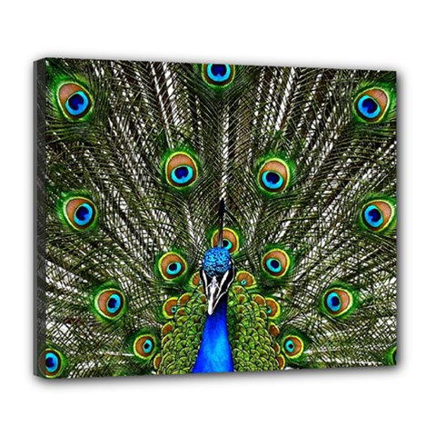 Peacock Deluxe Canvas 24  X 20  (framed)