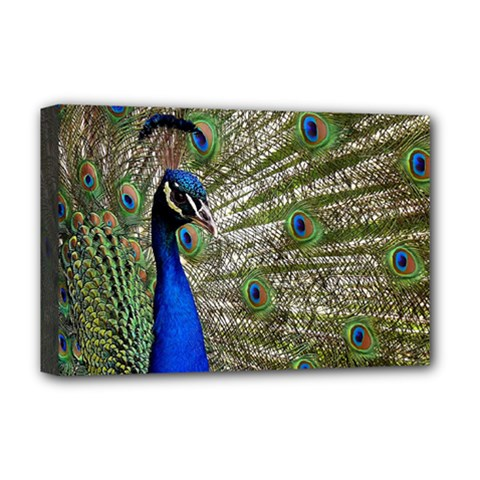 Peacock Deluxe Canvas 18  X 12  (framed)