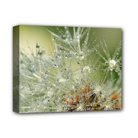 Dandelion Deluxe Canvas 14  x 11  (Framed)