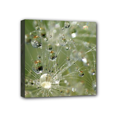 Dandelion Mini Canvas 4  X 4  (framed)
