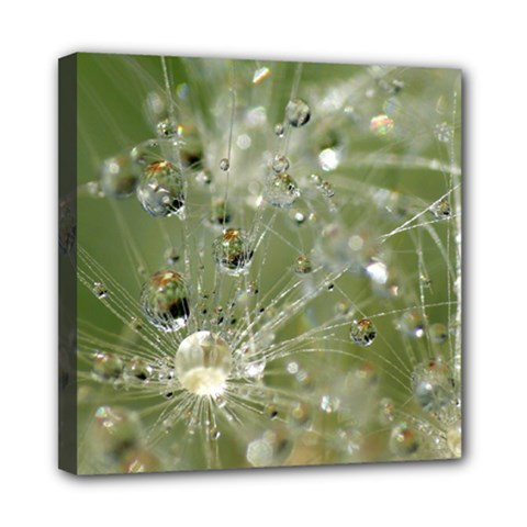 Dandelion Mini Canvas 8  x 8  (Framed)