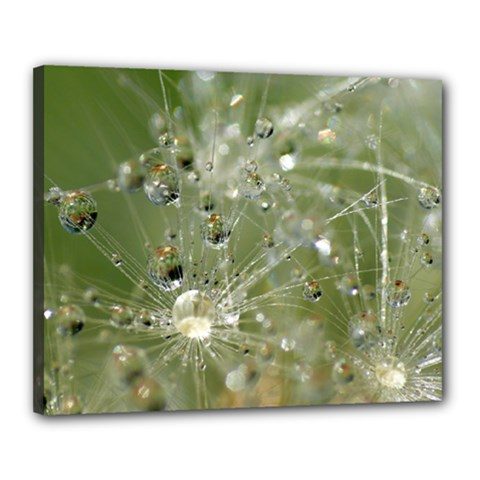 Dandelion Canvas 20  x 16  (Framed)