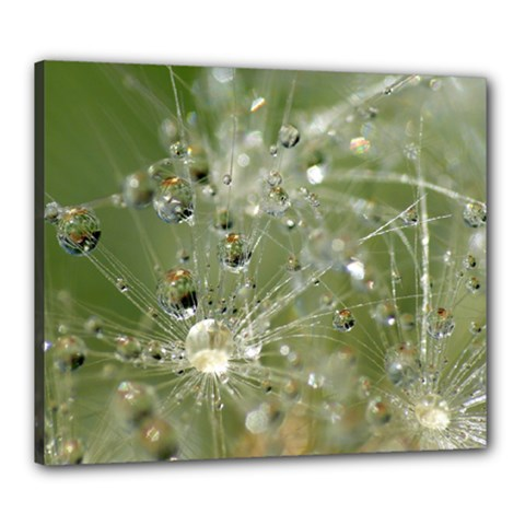 Dandelion Canvas 24  x 20  (Framed)