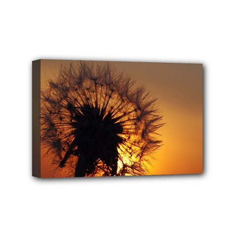 Dandelion Mini Canvas 6  x 4  (Framed)