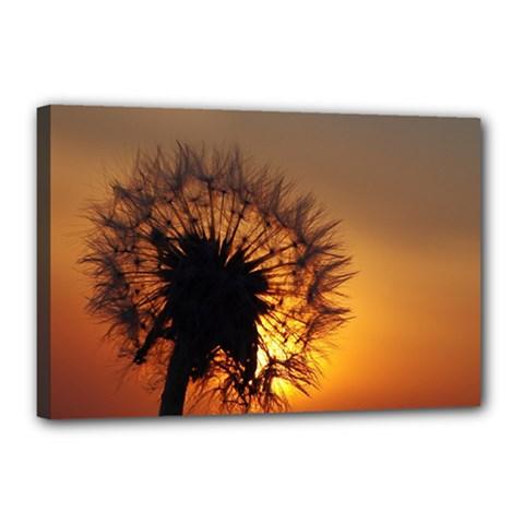 Dandelion Canvas 18  X 12  (framed)