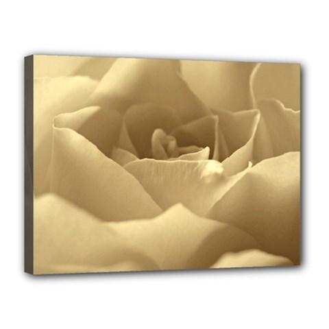 Rose  Canvas 16  x 12  (Framed)